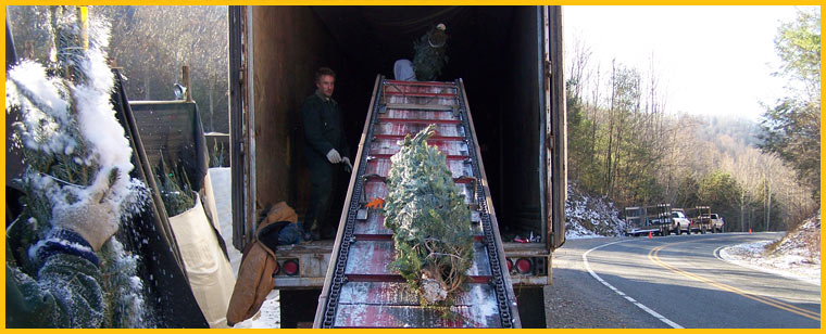 67e6d888fab ... Wholesale Christmas Trees North Carolina Fraser Fir Trees NC Christmas  Tree Farm Christmas ...